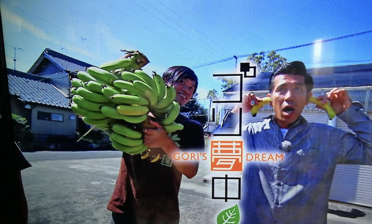 バナナ園ゴリ夢中